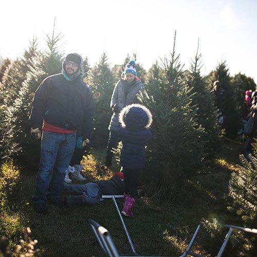 Christmas Tree Farm Southern California: Choose And Cut Christmas Trees At Dull's Tree Farm